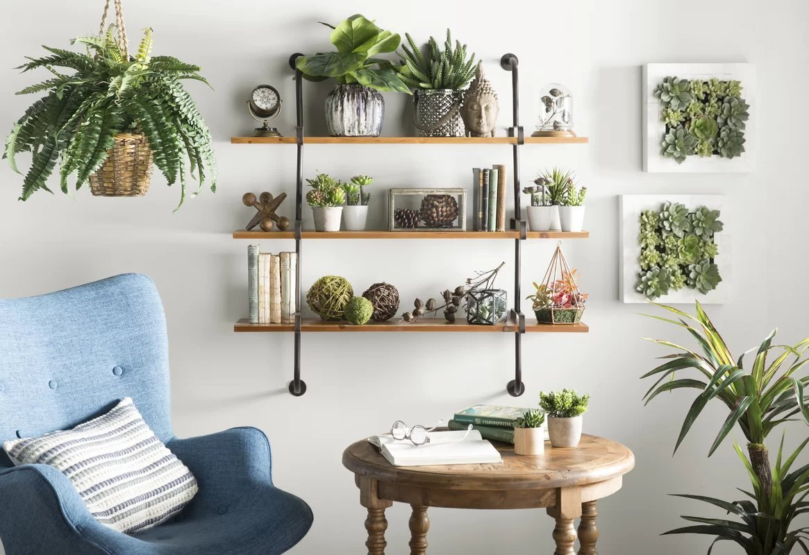 Top Indoor Plants that Clean Air And Remove Toxins | NASA Recommended