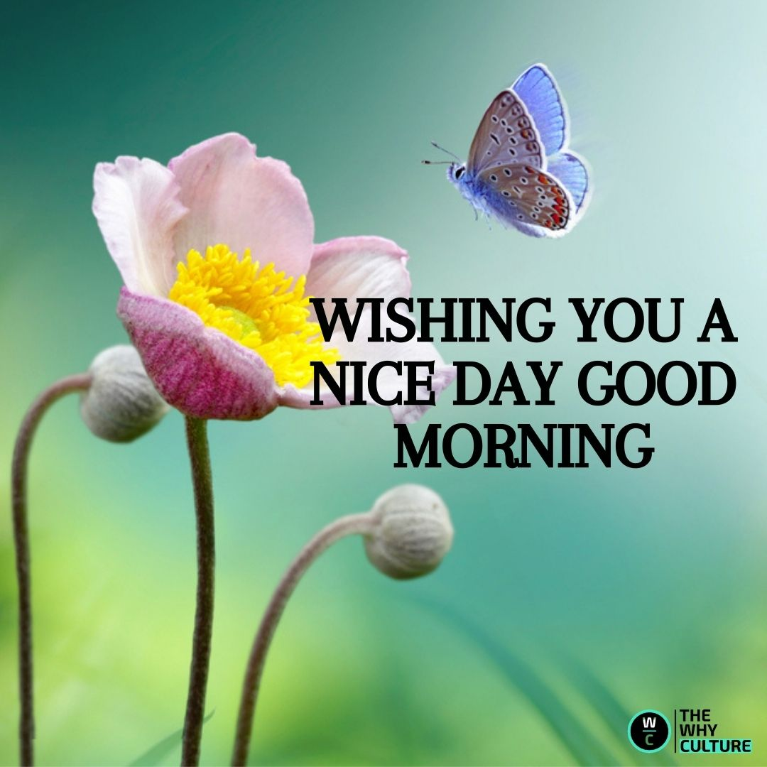 good morning flowers with butterfly and wishes