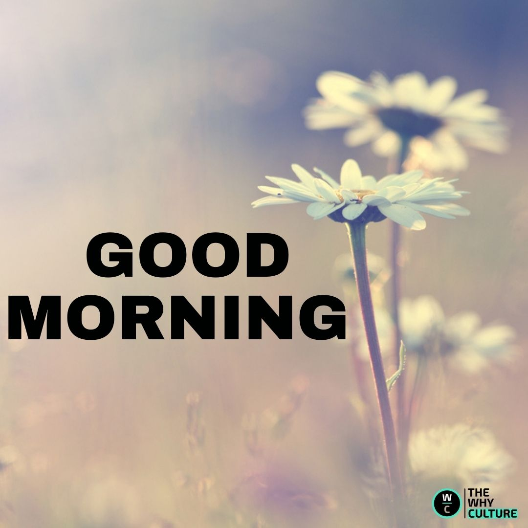 GOOD MORNING BEAUTIFUL FLOWERS IMAGES & QUOTES