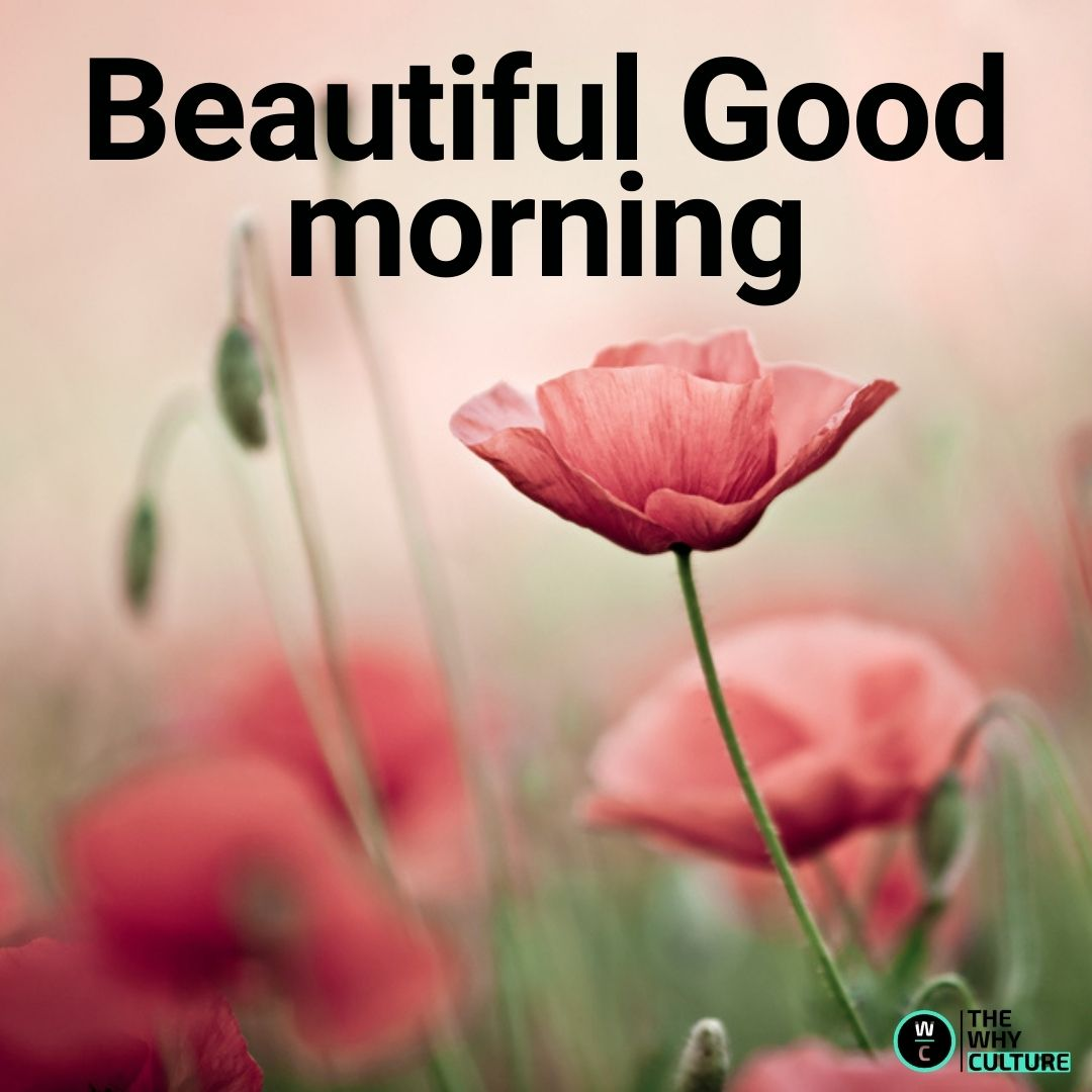 ollection features of Good Morning Images