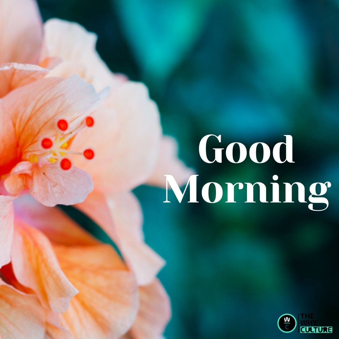 Good Morning. Have a Fresh new day!