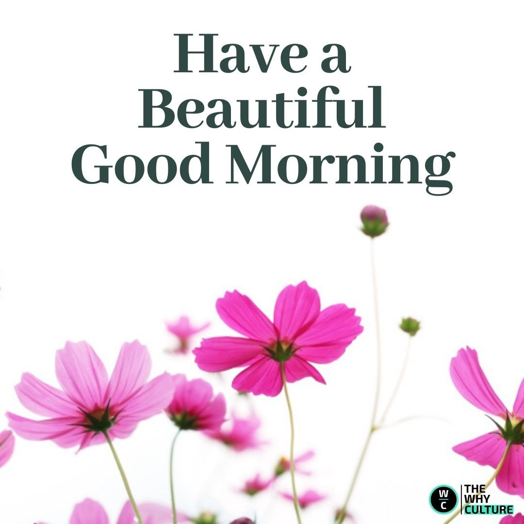 Good morning wish on image with white flowers