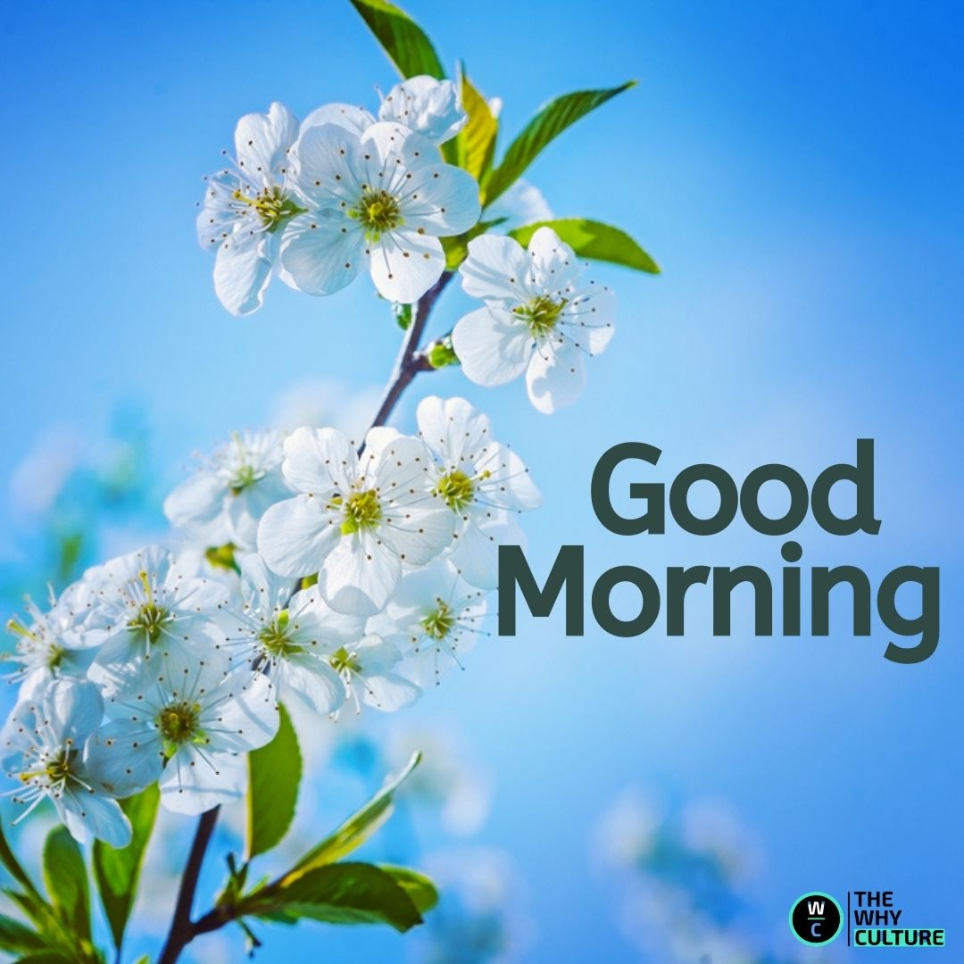 Good morning quote on image with beautiful white flowers.
