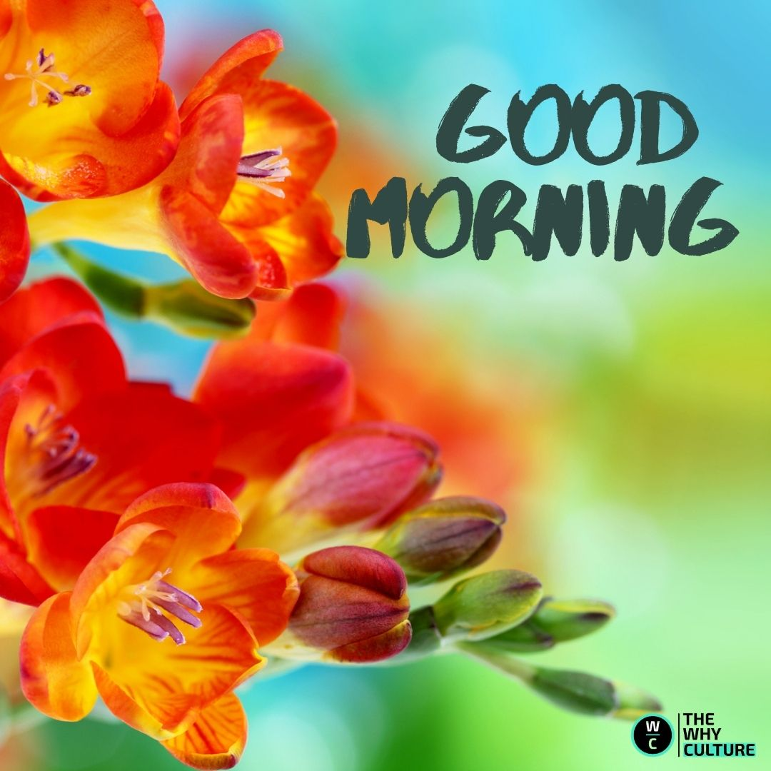 Good morning, have a good day.