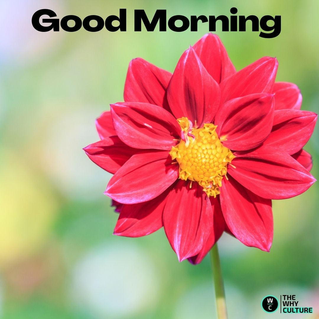 Good morning hd images with red flower