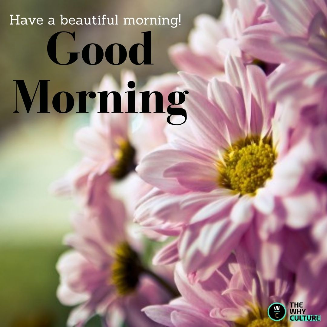 Beautiful good morning with a flower.