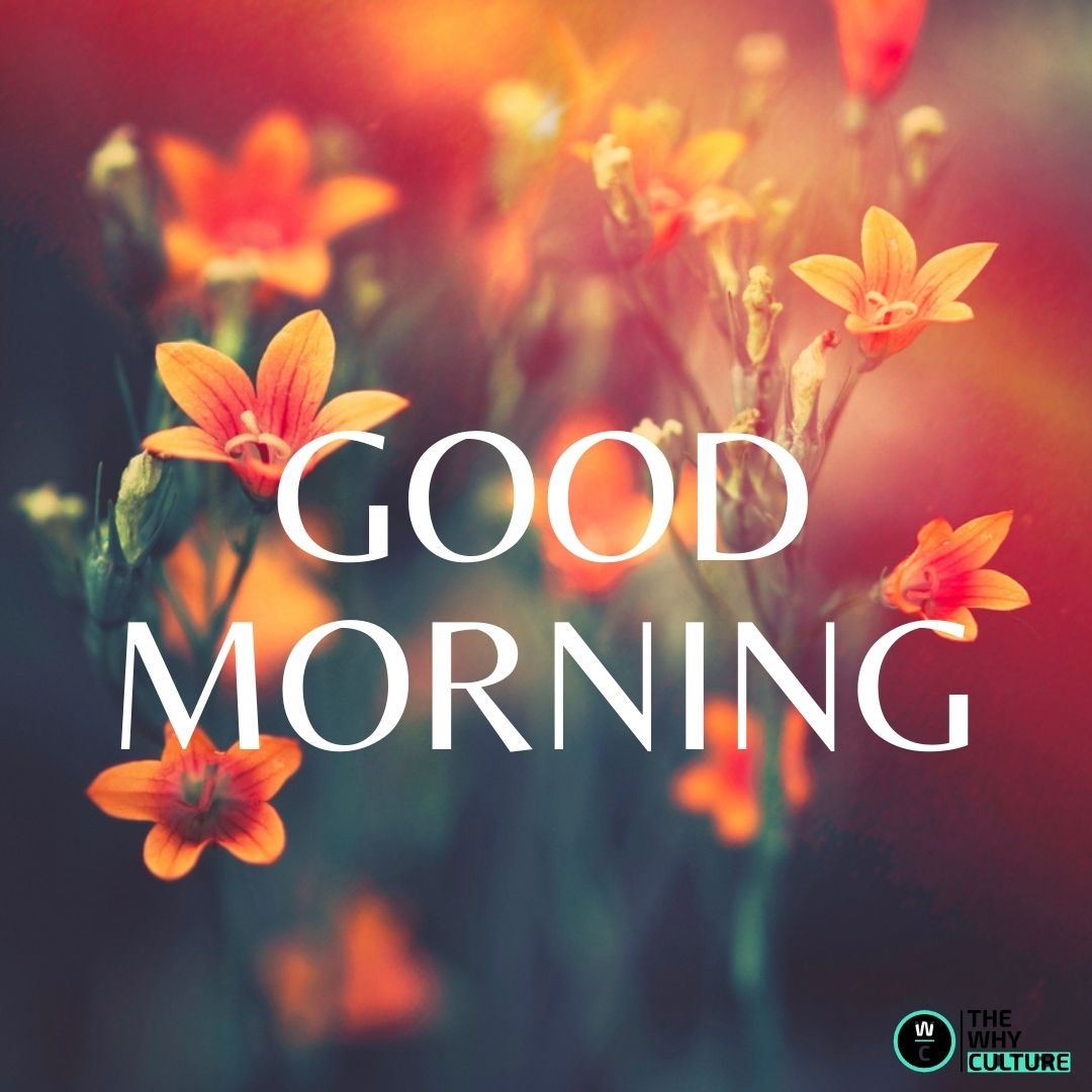 different color of good morning flower