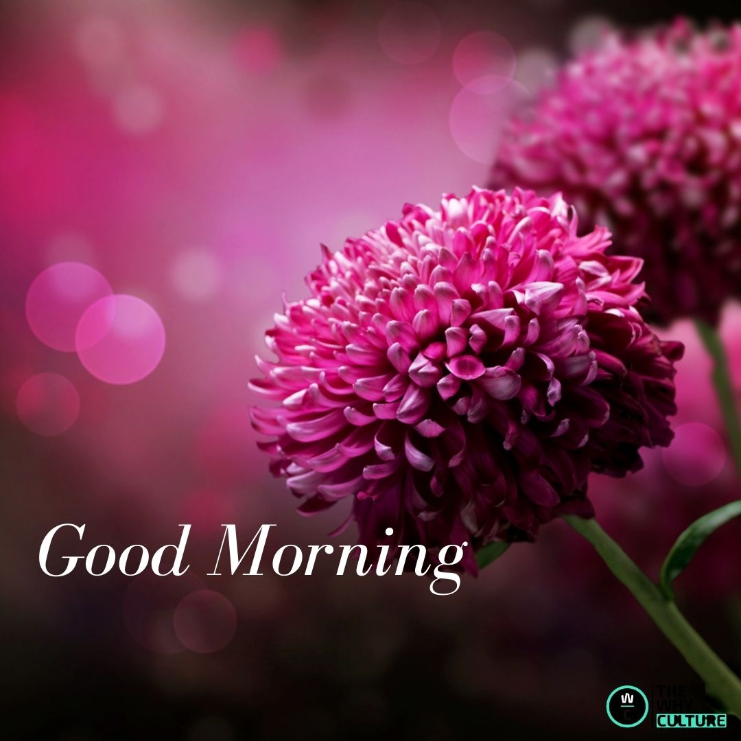 Good morning red flowers