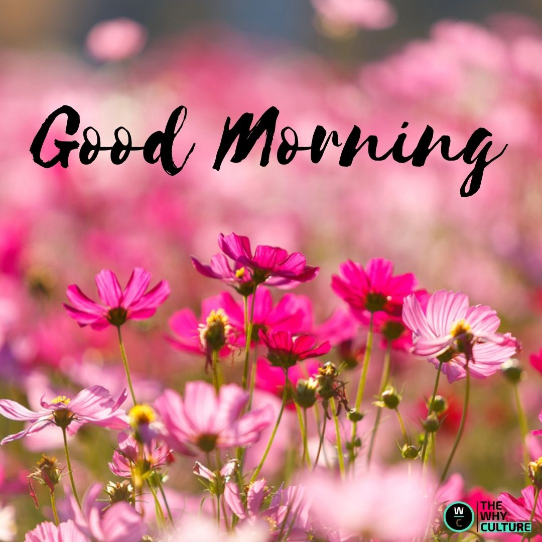 Good Morning flowers wishes
